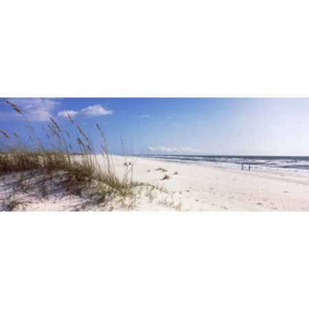Tall Grass On The Beach Perdido Key Area Gulf Islands National Seashore Pensacola Florida Usa Poster Print By Panoramic Images  48 X 16