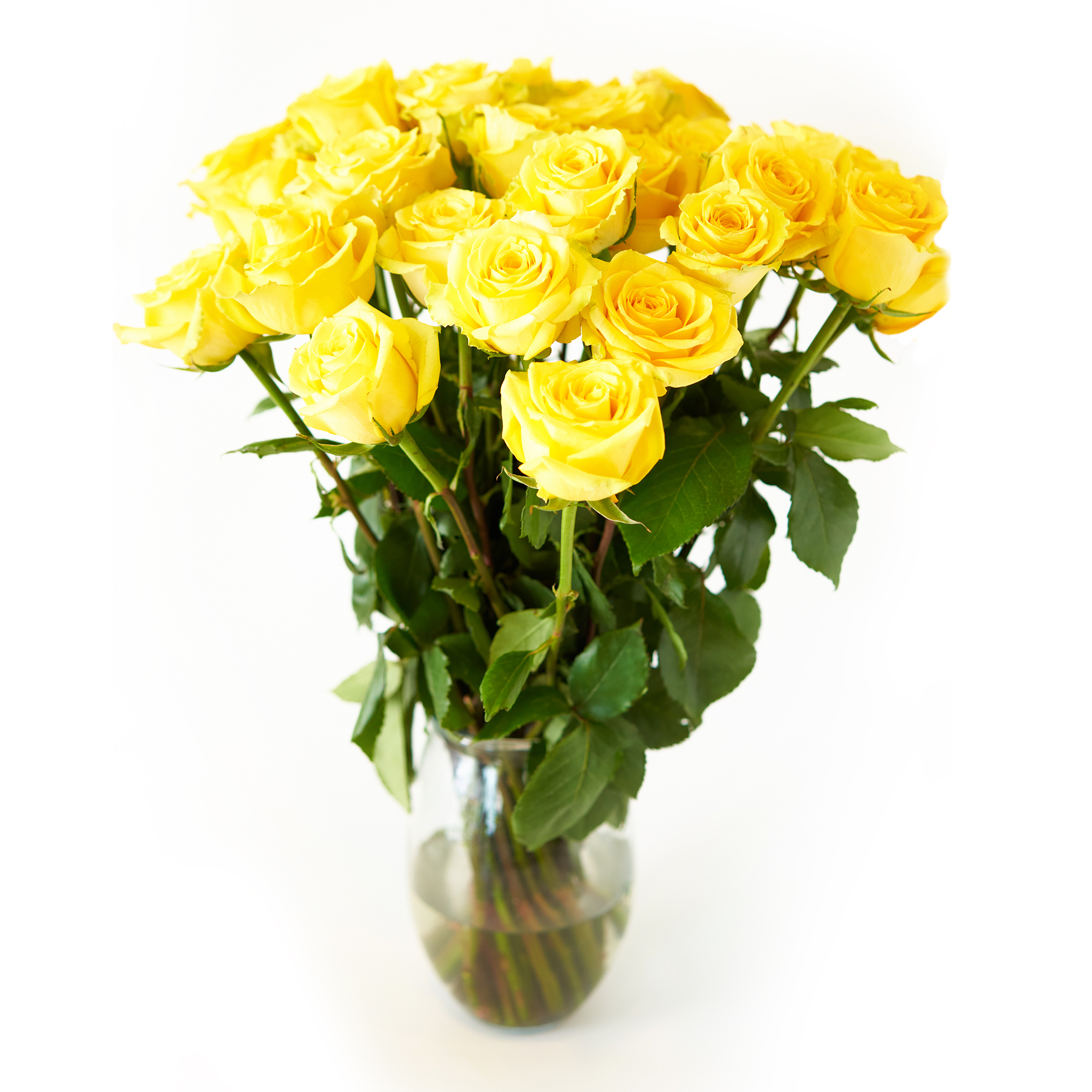 Yellow Roses Flower Bouquet 96 Yellow Roses Long Stem 8 Dozen Roses Beautiful Yellow Roses Delivery Luxury Fresh Roses Birthday Anniversary Roses Any Occasion Walmart Com Walmart Com