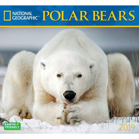 2019 Polar Bears NG Wall Calendar, by Zebra (Bear Calendar)