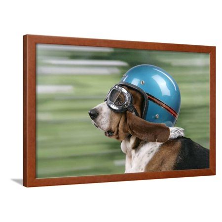 Basset Hound Wearing Goggles and Helmet Framed Print Wall - Hound Helmet