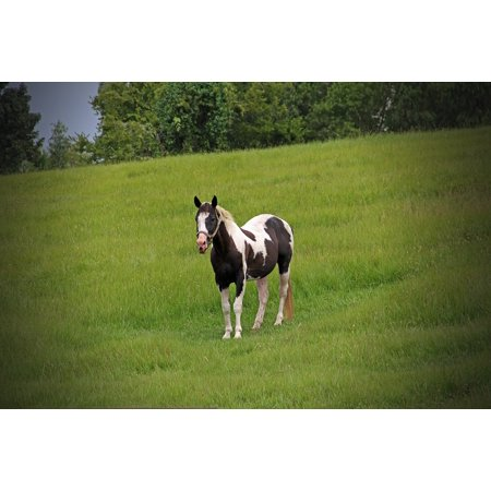 LAMINATED POSTER Spotted Painted Meadow Pinto Horse Pony Poster Print 24 x 36 (Sage Pinto Horse)
