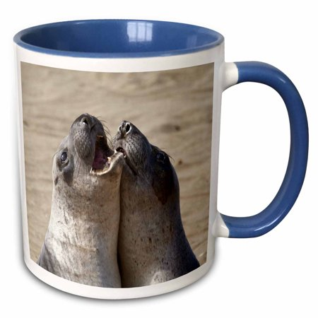 3dRose Piedras Blancas Elephant Seal Rookery, California - US05 CHA0048 - Chuck Haney - Two Tone Blue Mug, 11-ounce