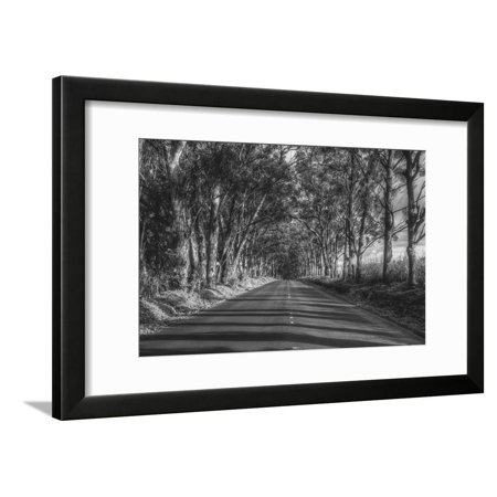 Tree Tunnel to Old Koloa Town (B/W), Kauai Hawaii Country Road Black and White Photography Framed Print Wall Art By Vincent (Country Road Glasses Frames)