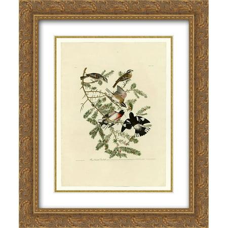 John James Audubon 2x Matted 20x24 Gold Ornate Framed Art Print 'Plate 127 Rose-breasted