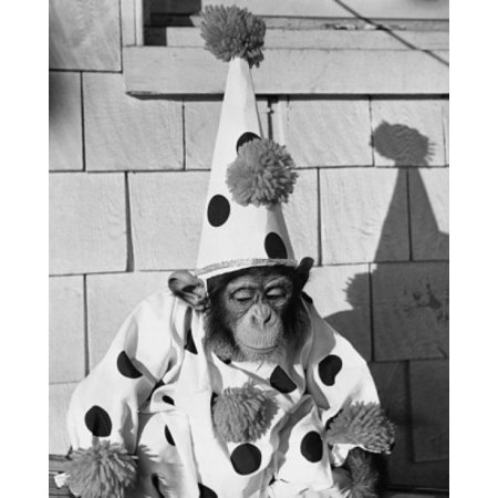 Close-up of a chimpanzee wearing a clown costume Canvas Art -  (18 x 24) (Chimpanzee Costume)