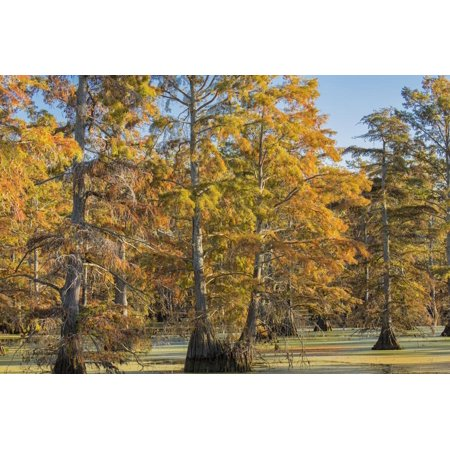 Bald Cypress Trees in Fall, Horseshoe Lake State Fish and Wildlife Areas, Alexander County, Il Print Wall Art By Richard and Susan Day - Halloween Lake County Il