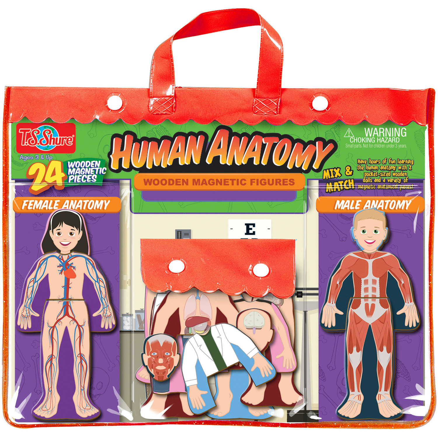 T.S. Shure Human Anatomy Wooden Magnetic Figures