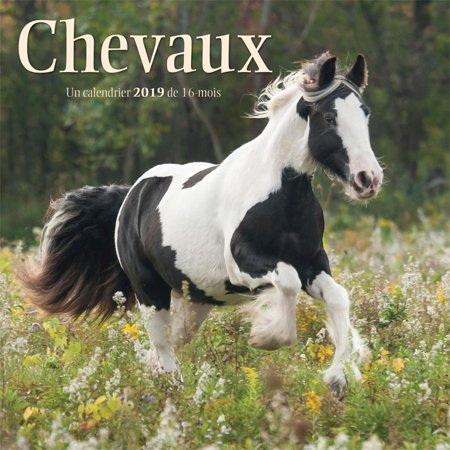 2019 Chevaux Horses Mini Wall Calendar (French),  by Wyman