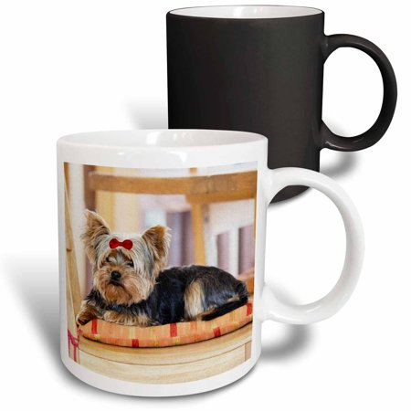 Terrier Dog Mug (3dRose Yorkie. Yorkshire Terrier. Cute puppy with red bow. Playful dog. - Magic Transforming Mug,)