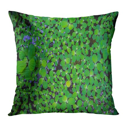 ECCOT Green Abstract Pistia Water Cabbage and Duck Weed Floating on Small Aquatic Plant Growing Faster Beauty Pillowcase Pillow Cover Cushion Case 20x20