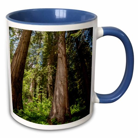- 3dRose Western Red Cedar Trees, Ross Cedar Grove near Libby, Montana - Two Tone Blue Mug, 11-ounce