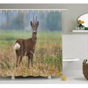 Hunting Decor Shower Curtain, Roe Deer Male Capreolus Western European  Wildlife Fauna Meadow Field Grass