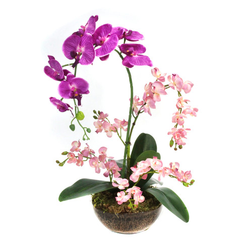 Dalmarko Designs Orchid Mix in Clay Planter