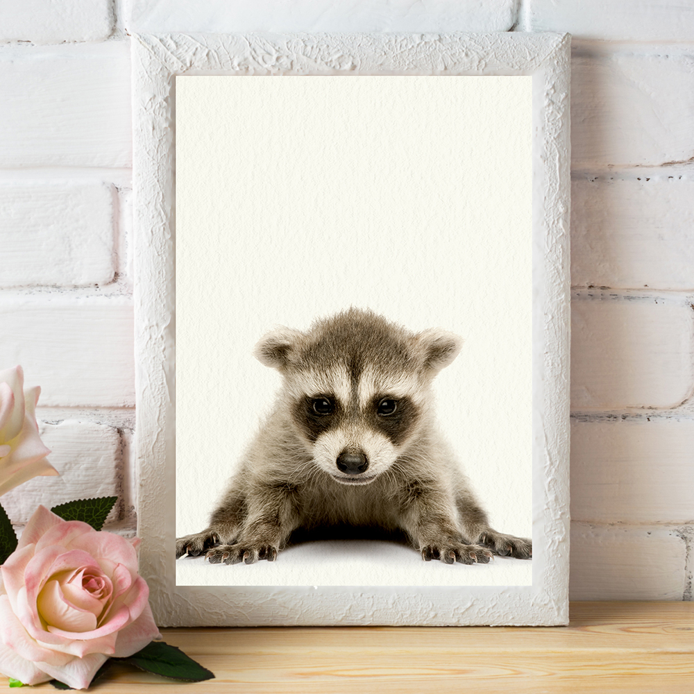 Baby Woodland Raccoon - Nursery Wall Décor Farm Baby Animal Art Print