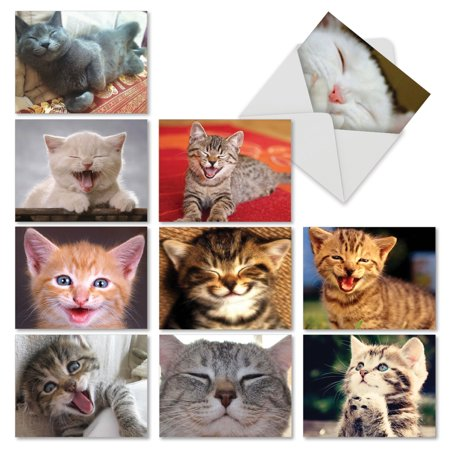 'M6485OCB SMITTEN KITTENS' 10 Assorted All Occasions Cards Featuring Adorable Cats and Kittens Putting on Their Biggest Smile with Envelopes by The Best Card (Best Cards After Bankruptcy)
