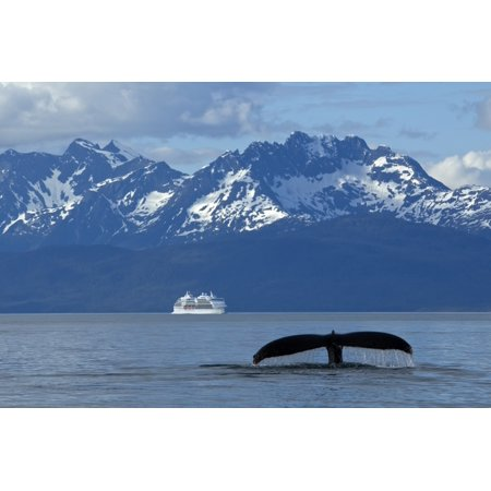 Composite Humpback Whale Fluking In Lynn Canal With A Cruise Ship In The Distance Inside Passage Southeast Alaska Summer