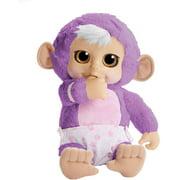 Animal Babies Baby Monkey