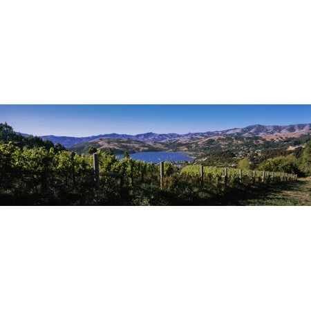Vineyard Akaroa Harbour Banks Peninsula South Island New Zealand Poster Print
