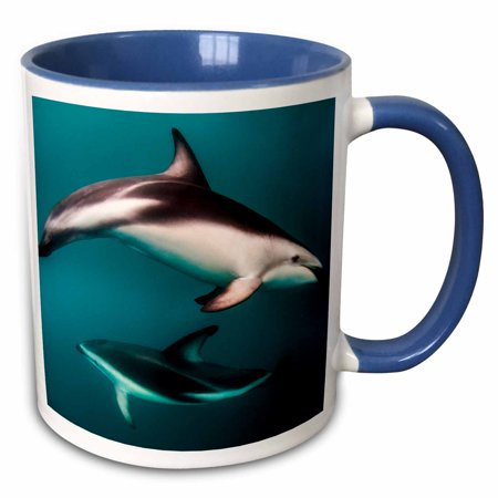 Dusky Dolphin (3dRose Pod of Dusky Dolphins off of Kaikoura, New Zealand - Two Tone Blue Mug, 11-ounce)
