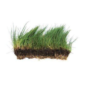 Dwarf Hairgrass on 3 x 5 mat Foreground Carpet Aquarium Plant by Aquarium Plants & Pets