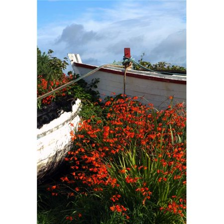 Posterazzi DPI1828698LARGE Flowers in Wooden Boat in Roundstone Galway Ireland Poster Print by Peter Zoeller, 24 x 36 - Large - image 1 of 1