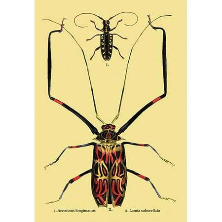 "Beetles: Acrocinus Longimanus and Lamia Subocellata #2- Fine Art Canvas Print (20"" x 30"")"