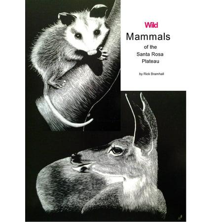 Wild Mammals of the Santa Rosa Plateau - eBook