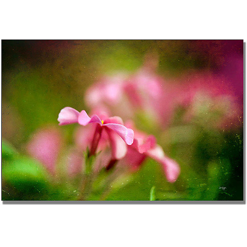 "Trademark Fine Art ""Pink Phlox"" Canvas Wall Art by Lois Bryan"