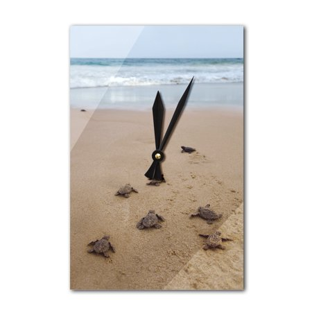 Sea Turtles Hatching - Lantern Press Photography (Acrylic Wall