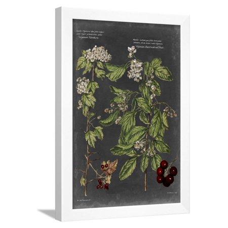 Vintage Botanical Chart VI Framed Print Wall Art By Vision Studio ()