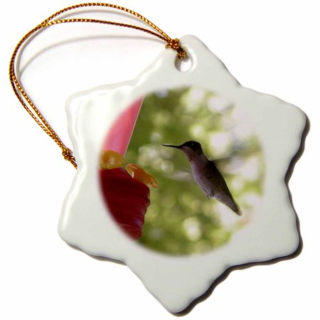 3dRose Hummingbird Flying to Feeder - Snowflake Ornament, 3-inch
