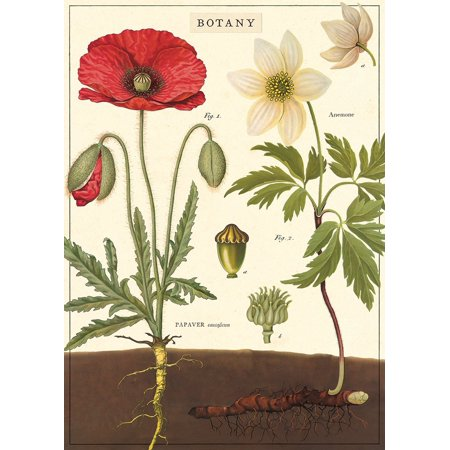 Cavallini & Co. Botany Chart Decorative Paper Sheet 20
