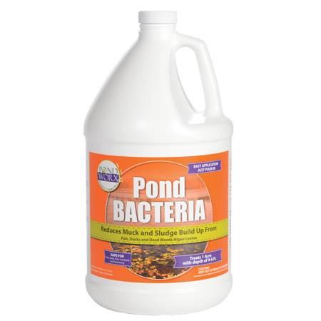 - Pondworx Pond Bacteria - Formulated for Large Ponds, Water Features and Safe for Koi - 1 Gallon