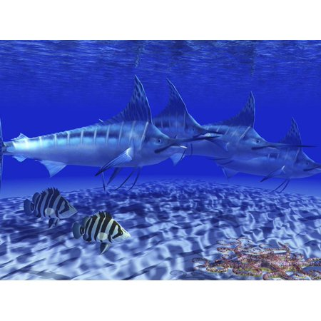 A Pack of Blue Marlin Swimming with Two Siamese Tigerfish Print Wall Art By Stocktrek Images (Marlin Pack)