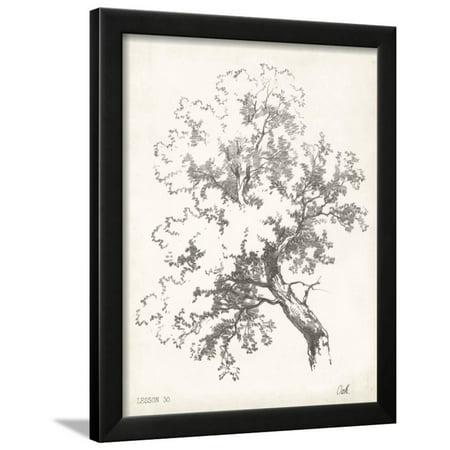 Oak Tree Study Framed Print Wall Art - Walmart.com