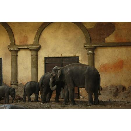 LAMINATED POSTER Hagenbeck Hamburg Zoo Elephant Hagen Beck Zoo Poster Print 24 x 36