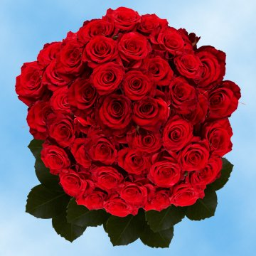 Globalrose 150 Fresh Cut Red Roses   Large Bloom Roses   Fresh Flowers Wholesale Express Delivery