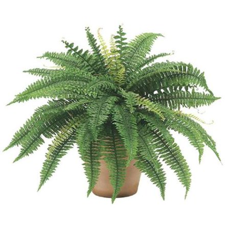 24 Inch Long Silk Artificial Boston Fern Bush 30 Inch Spread Plant 48 - 40w 48 Plant