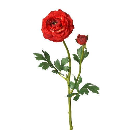 Floral Ranunculus Stem
