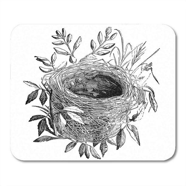 SIDONKU Nest of Sedge Warbler Bird Vintage Sourced from