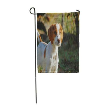 LADDKE Epagneul Breton Spaniel Brittany Bretonischer Hunting Dog Puppy Briton Garden Flag Decorative Flag House Banner 12x18 inch