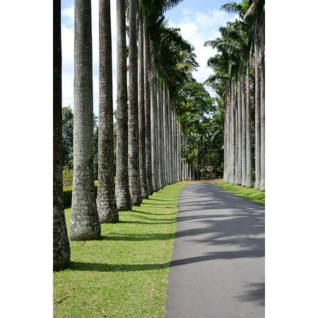LAMINATED POSTER Road Way Path Tall Trees Leading Lines Trees Poster Print 24 x 36