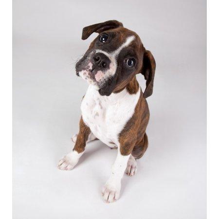 Portrait Of A Dog Canvas Art - Leah Hammond  Design Pics (26 x 30) ()