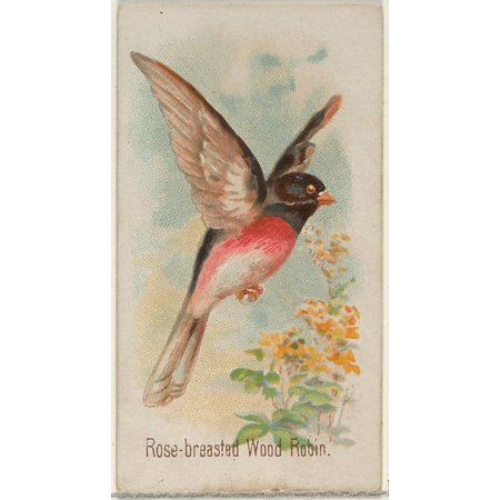 Rose-breasted Wood Robin from the Song Birds of the World series (N23) for Allen & Ginter Cigarettes Poster Print (18 x 24)