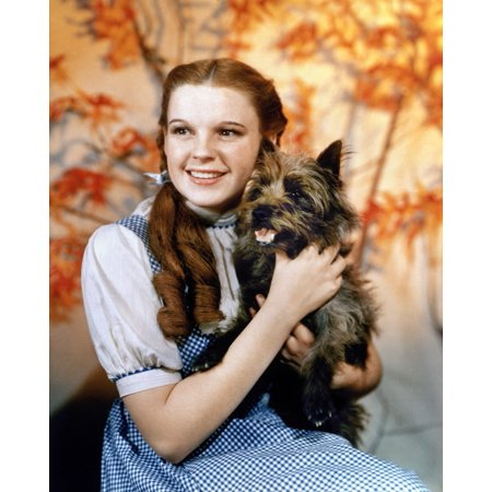 Stretched Canvas Art - Wizard Of Oz, 1939. /Njudy Garland As Dorothy, With Her Dog Toto, In The 1939 Film 'The Wizard Of Oz.' - Medium 18 x 24 inch Wall Art Decor Size. - Dorothy Wizard Of Oz Dog