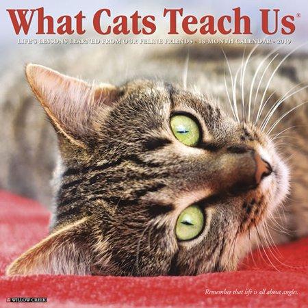 Willow Creek Press 2019 What Cats Teach Us Wall Calendar
