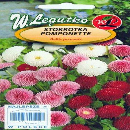 Polish Daisy Mixed Seeds   Stokrotka   Pomponette