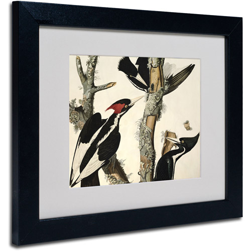 "Trademark Fine Art ""Ivory-Billed Woodpecker"" Canvas Art by John James Audubon, Black Frame"