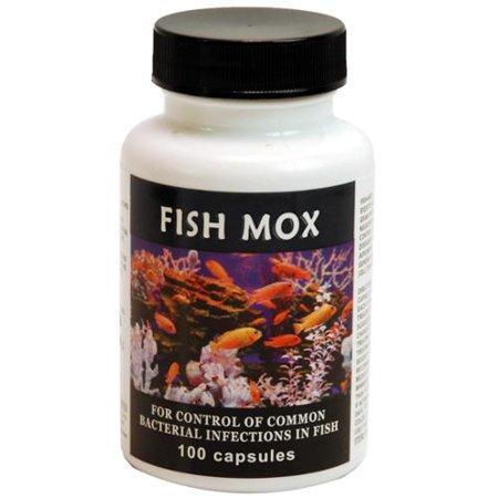 681441411633 upc thomas labs fish mox amoxicillin 12 ForFish Mox Amazon