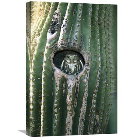 Global Gallery Nature Photographs Ferruginous Pygmy Owl In Saguaro Cactus  Altar Valley  Arizona By Tom Vezo Photographic Print On Wrapped Canvas